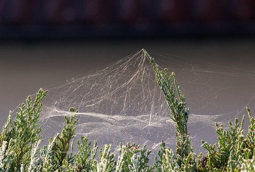 spider-webs-3748193__340