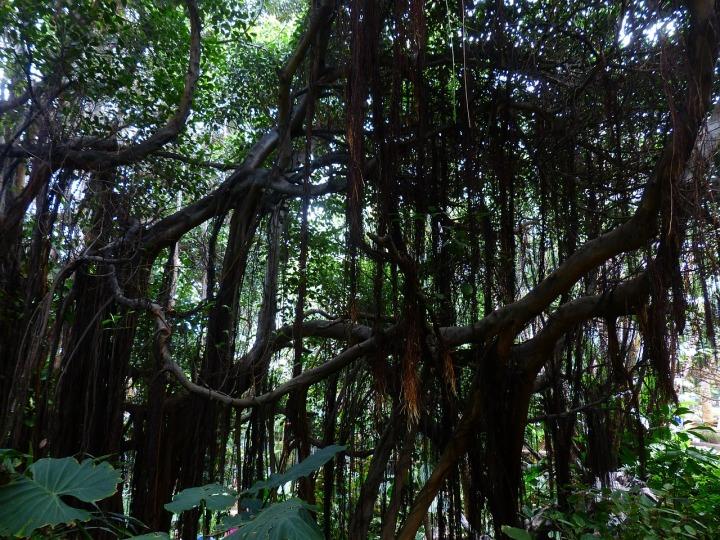 jungle-406788_1280